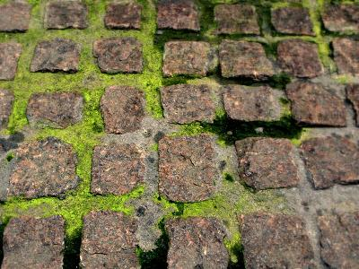Paley Park Bricks and Moss