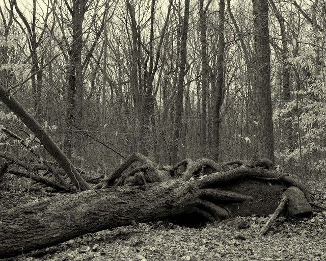 Eagle Rock Reservation - Fallen Tree