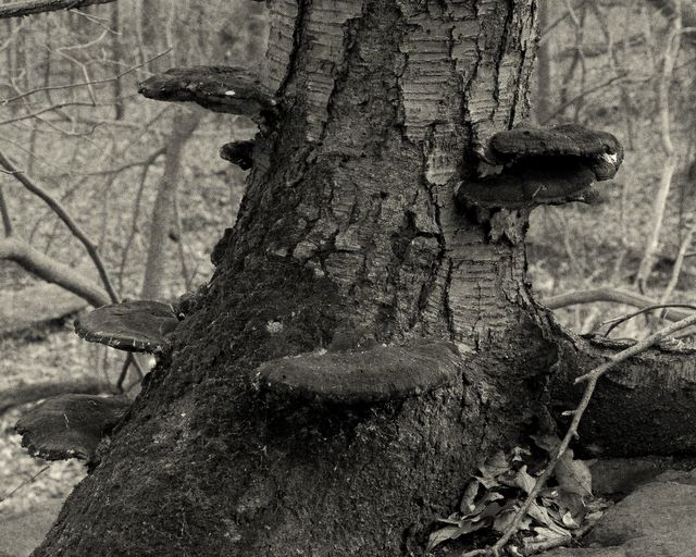 Eagle Rock Reservation - Trunk and Mushrooms