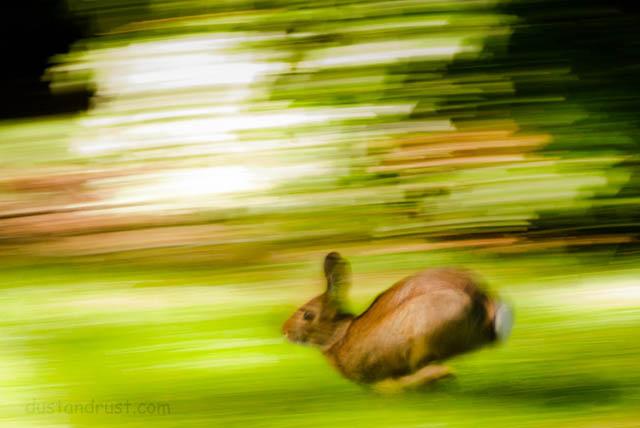Run, Rabbit Run