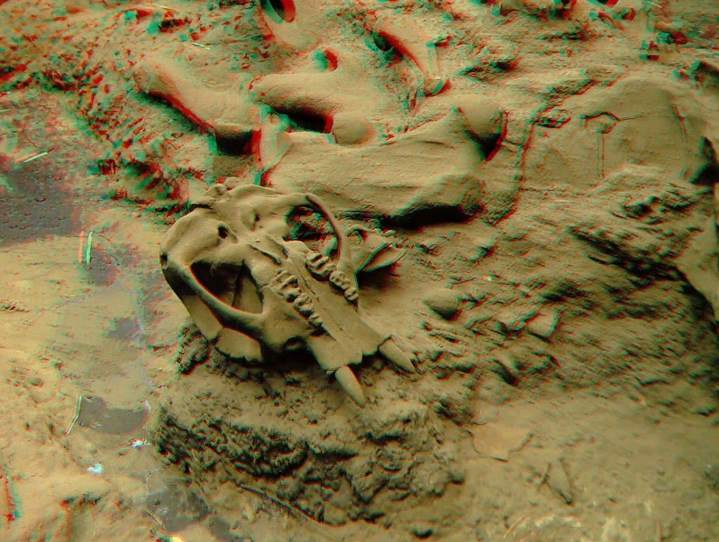 Skull at La Brea Tar Pit - Anaglyph